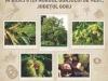 life-green-habitats-gorj-afis-a2-420x594mm